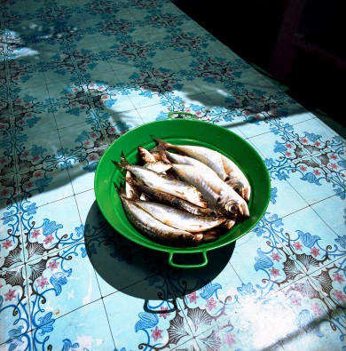 Sardinen Fischen in Peniche Portugal_das Magazin 01.07.09