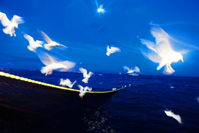 Sardinen Fischen in Peniche Portugal_das Magazin 01.06.09