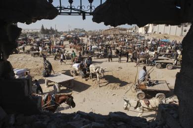 Animal market at war torn Alshjaia, Gaza.