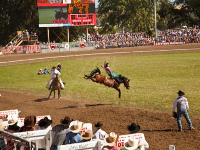 Saddle bronc competition at the Pendleton Roundup