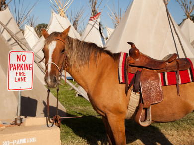 Horse is illegally parked at the Pendleton Roundup