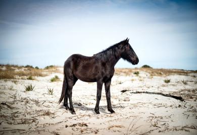 Wild horse, Cumberland Island, GA Imke Lass/Redux Pictures