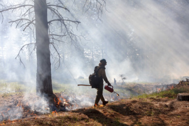 Controlled burn in the Tahoe National Forest, on June 6, 2019.
