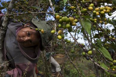 Coffee Production: Chiapas, Mexico