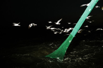 Gulf Coast Shrimping