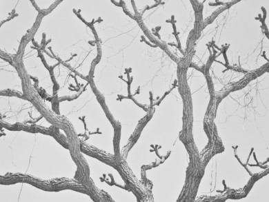 The branches of a tree in a host community in Waru, Nigeria.