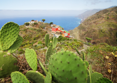 Spain, Canary Islands, La Palma, El Tablado, Kakteenlandschaft