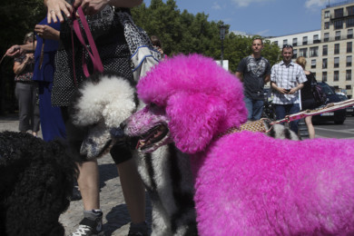 pinkdogs