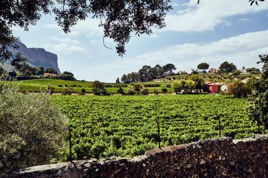 Vineyards, Cassis, France