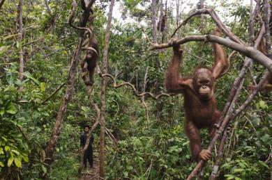Asia's Wildlife Trade