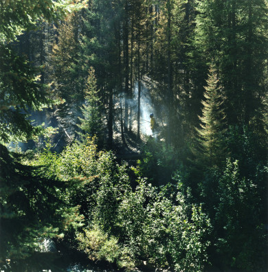 DeCecco_Smoke_Trees