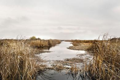New_wetlandssky