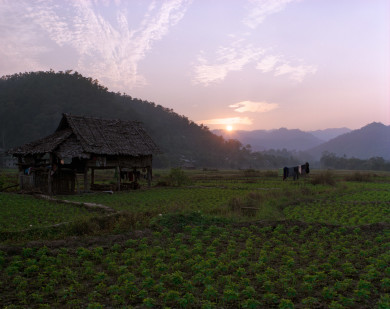 Thatch House in rice fields at sunset - Mae Hong Song - Thailand