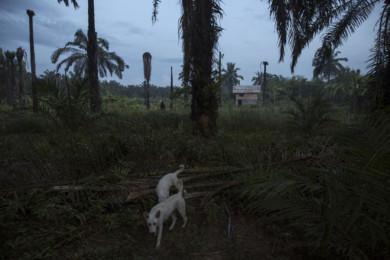 A Village Under Siege - The Story of Klong Sai Pattana