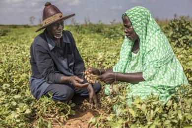 Food Security in Senegal