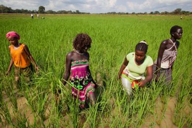 Land Leasing in Ethiopia