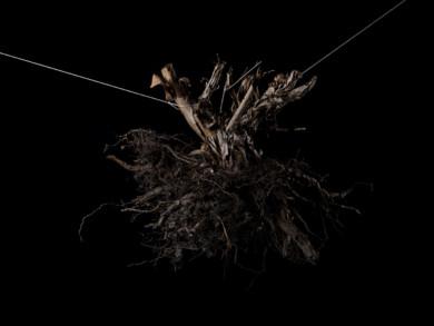 roots_withstrings_imgp2541