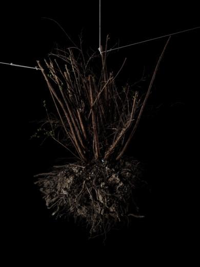 roots_withstrings_imgp2564