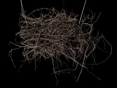 roots_withstrings_imgp2590
