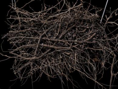 roots_withstrings_imgp2595