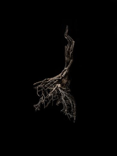 tree-float_img1363