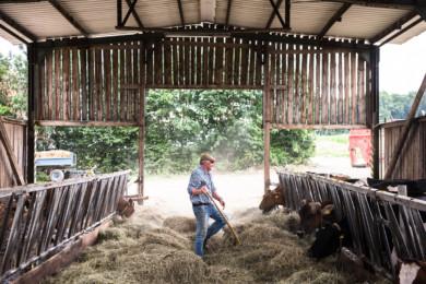 Organic farm from politician Martin Haeusling