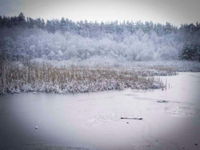 Berlin, January 2015 - A little iced pond in the area of Grunewald