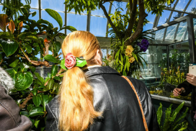 A woman, her locks tamed by a blossom-adorned clasp, admires vanda hybrid orchids at the New York Botanical Garden's 16th annual Orchid Show in New York.