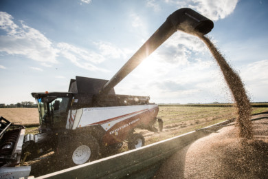 sa_wheat_harvest20